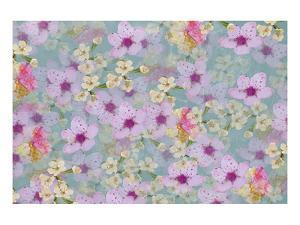 Spring blossom by Claire Westwood