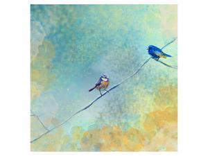 Two birds by Claire Westwood