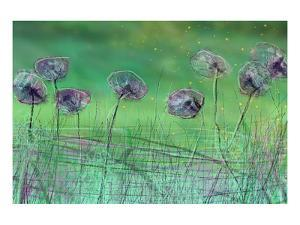 Watery Flower show by Claire Westwood