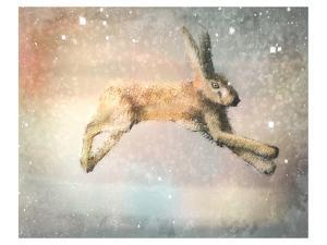 Winter Hare by Claire Westwood