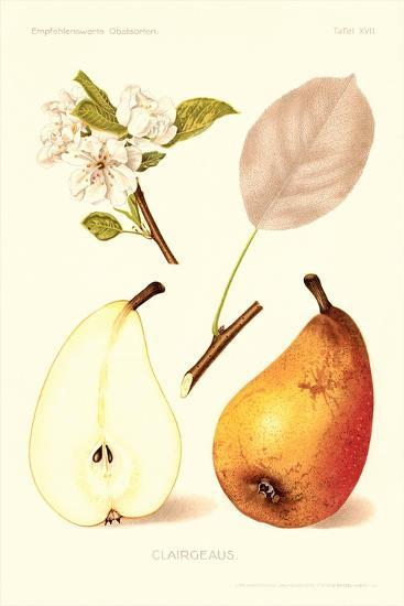 Clairgeaus Pears--Art Print