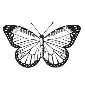 Butterfly III by Clara Wells