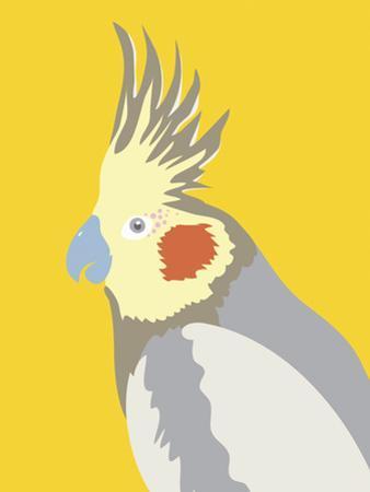Colourful Cockatiel by Clara Wells