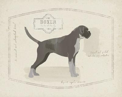 Dog Club - Boxer