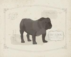 Dog Club - Bulldog by Clara Wells