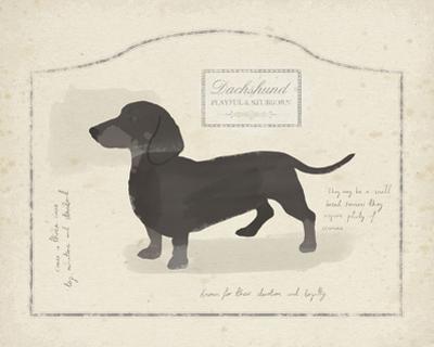 Dog Club - Dachshund by Clara Wells