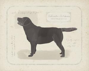 Dog Club - Labrador by Clara Wells