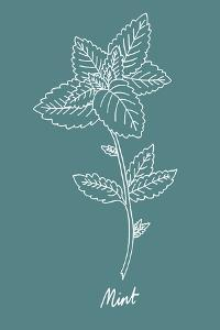 Simple Herb - Mint by Clara Wells