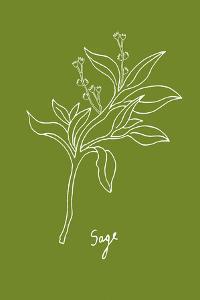 Simple Herb - Sage by Clara Wells