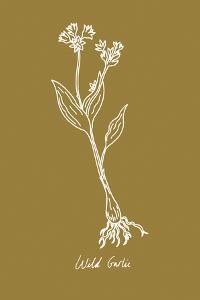 Simple Herb - Wild Garlic by Clara Wells