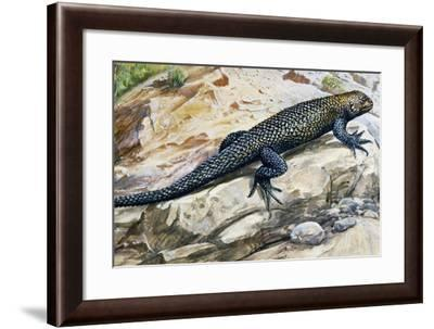 Clark's Spiny Lizard (Sceloporus Clarkii), Phrynosomatidae--Framed Giclee Print
