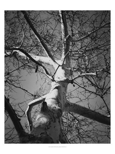 Classic Birch I-Ethan Harper-Photographic Print