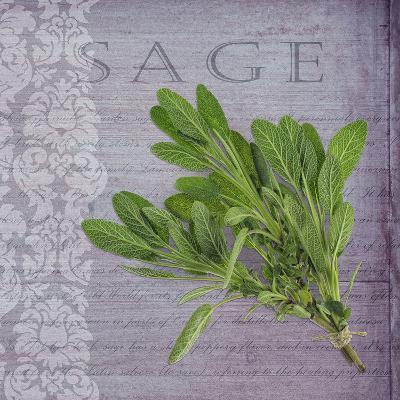 Classic Herbs Sage-Cora Niele-Photographic Print