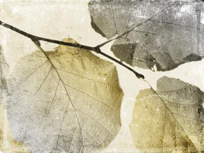Classic Leaves-Jace Grey-Art Print