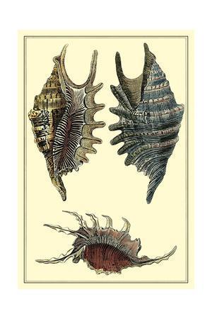 https://imgc.artprintimages.com/img/print/classic-shells-iii_u-l-pnar8a0.jpg?p=0