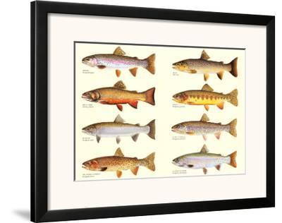 Classic Trout-Joseph Tomelleri-Framed Art Print