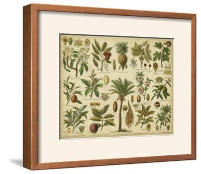 Classification of Tropical Plants-Vision Studio-Framed Photographic Print