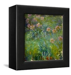 Agapanthus (1914-26) by Claude Monet
