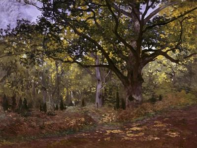 Bodmer Oak, Fontainbleau Forest by Claude Monet