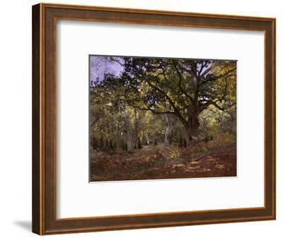 Bodmer Oak, Fontainbleau Forest