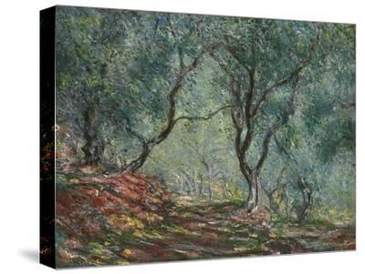 Bois D'Oliviers Au Jardin Moreno, 1884