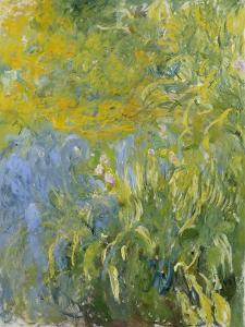 Iris, 1914-17 by Claude Monet