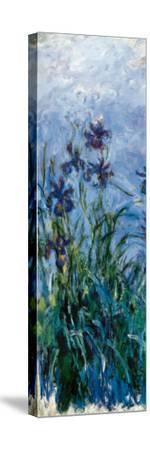 Iris Mauve (detail)