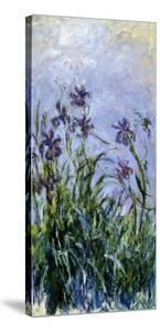 Iris Mauves, 1914-1917 by Claude Monet
