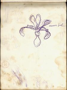 Iris (Purple Pencil on Paper) by Claude Monet