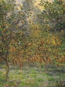 Lemon Trees, 1884 by Claude Monet