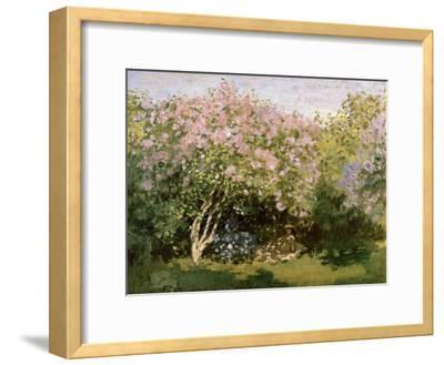 Lilac in the Sun, 1872-1873