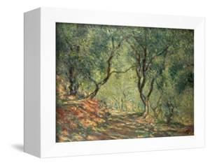 Olive Grove in the Moreno Garden, 1884 by Claude Monet