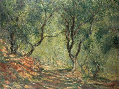 Olive Grove in the Moreno Garden, 1884
