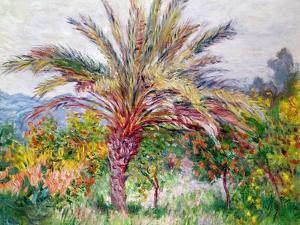 Palm Tree at Bordighera, C.1884 by Claude Monet