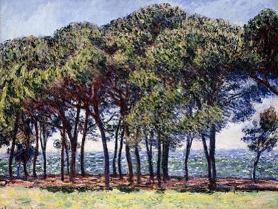 Pines, Cap D'Antibes, 1888