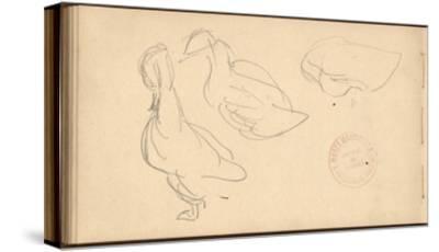 Study of Ducks (Pencil on Paper)