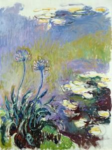 The Agapanthus, 1914-17 by Claude Monet