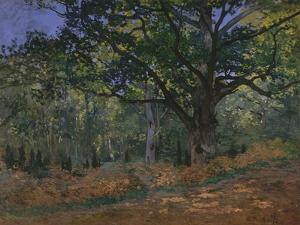 The Bodmer Oak, Fontainebleau Forest, 1865 by Claude Monet
