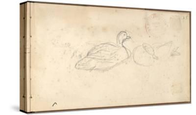 Two Ducks (Pencil on Paper)