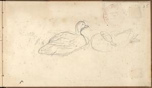Two Ducks (Pencil on Paper) by Claude Monet