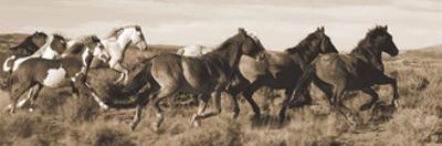 Wild Horses by Claude Steelman