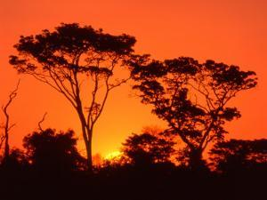 Trees Silhouetted by Dramatic Sunset, South Africa by Claudia Adams