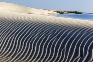 Dune and red mangrove, Baja California, Mexico by Claudio Contreras