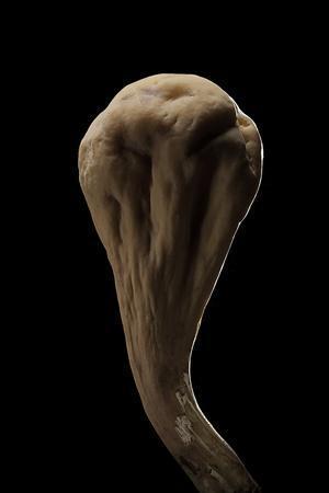 https://imgc.artprintimages.com/img/print/clavariadelphus-pistillaris-giant-club_u-l-pzs5ds0.jpg?p=0