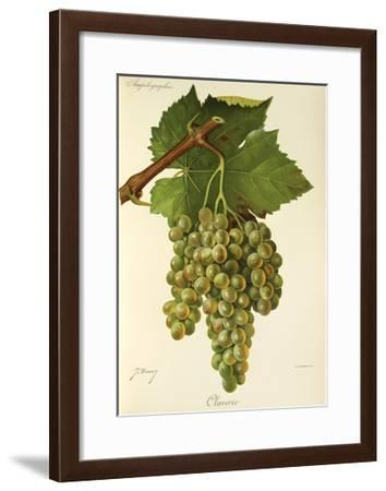 Claverie Grape-J. Troncy-Framed Giclee Print