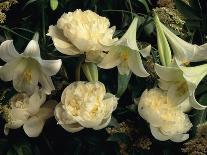 Succulent Echeveria-Clay Perry-Photographic Print