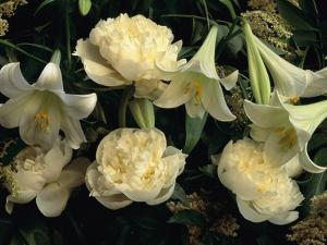 Easter Lilies and White Peonies by Clay Perry