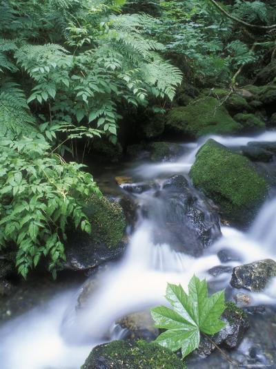 Clean Water Creek Flowing Through Forest Greenery, Alaska-Rich Reid-Photographic Print