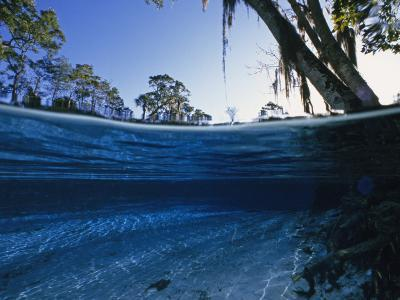 Clear Water of Manatee Springs, with Spanish Moss Draped Trees, Manatee Springs, Florida-Paul Sutherland-Photographic Print