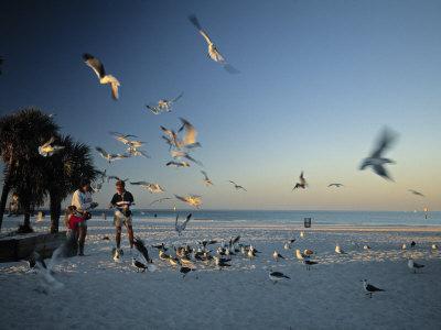 https://imgc.artprintimages.com/img/print/clearwater-beach-florida-usa_u-l-p6dmde0.jpg?p=0